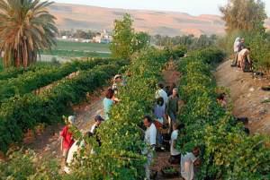 Profético: Desierto florece en Israel